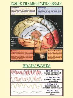 Inside the Meditating Brain
